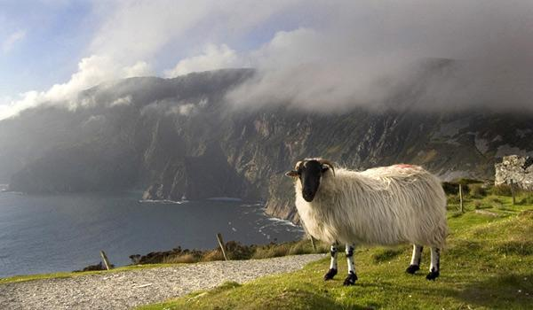 A Local Resident takes in the stunning view at Slieve League, County Donegal!