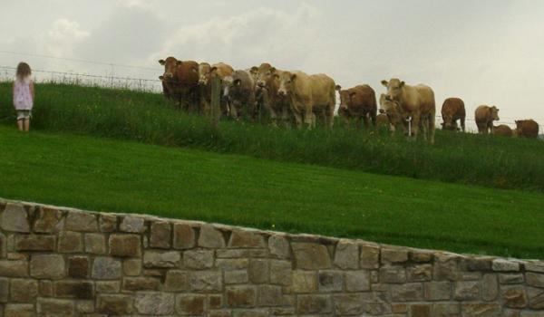 Eden Cottage Retreat: Meet the Bovine Neighbors!