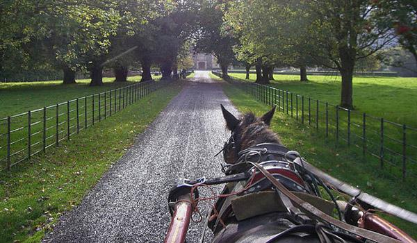 Horse & Carriage 'Jaunting Car' Ride in Killarney National Park