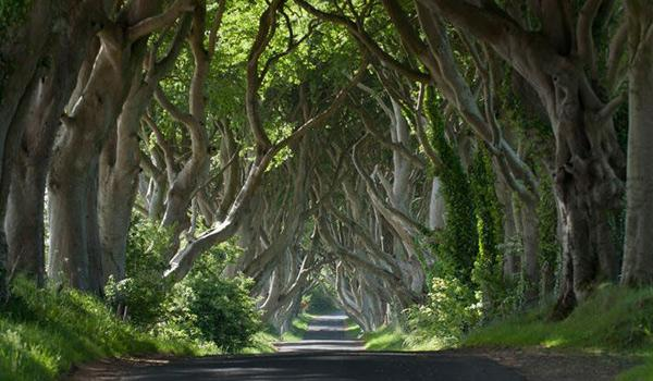 The King's Road a.k.a. The Dark Hedges, near Armoy in County Antrim.