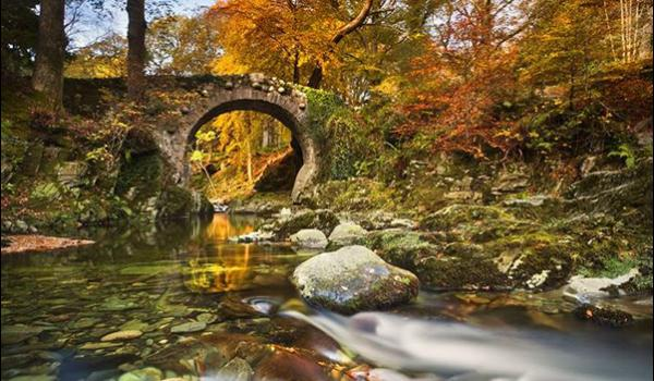 Game of Thrones Day Tour Foleys Bridge in Tollymore Forest