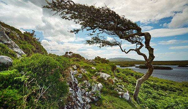 Behold the Stunning Beauty of Connemara National Park