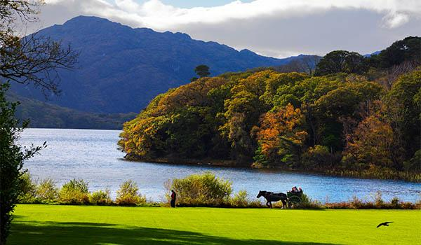 Traditional Jaunting Car Tour in Killarney National Park