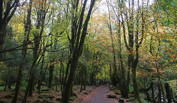 Killarney National Park dark trees with green moss leading down pathway