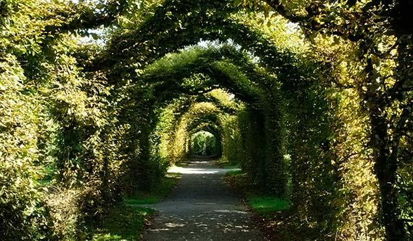 green scrub walkway in Birr Castle Gardens County Offaly